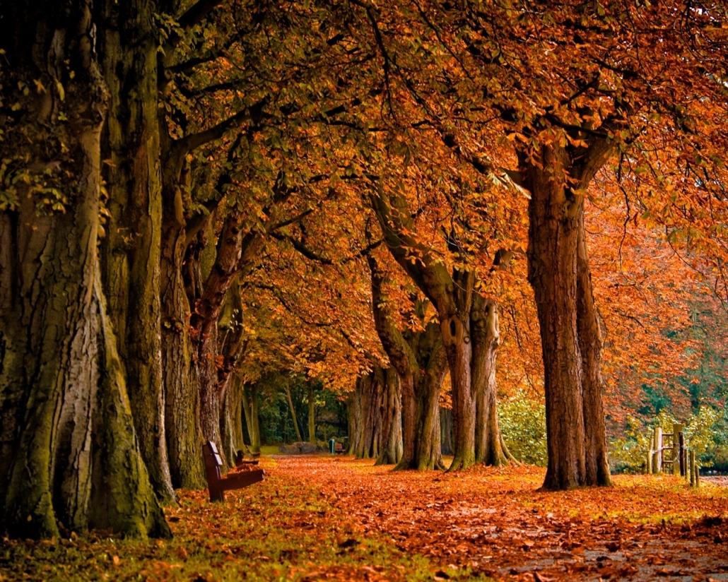 Avenue des érables l'automne à Montréal