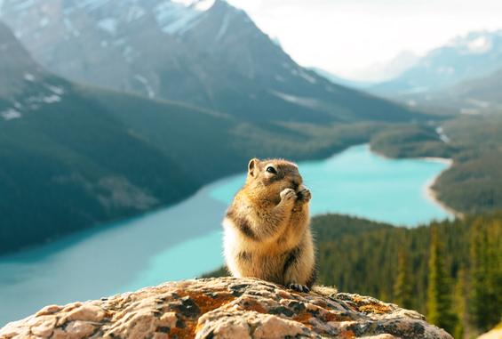Observation faune, Alberta, Canada
